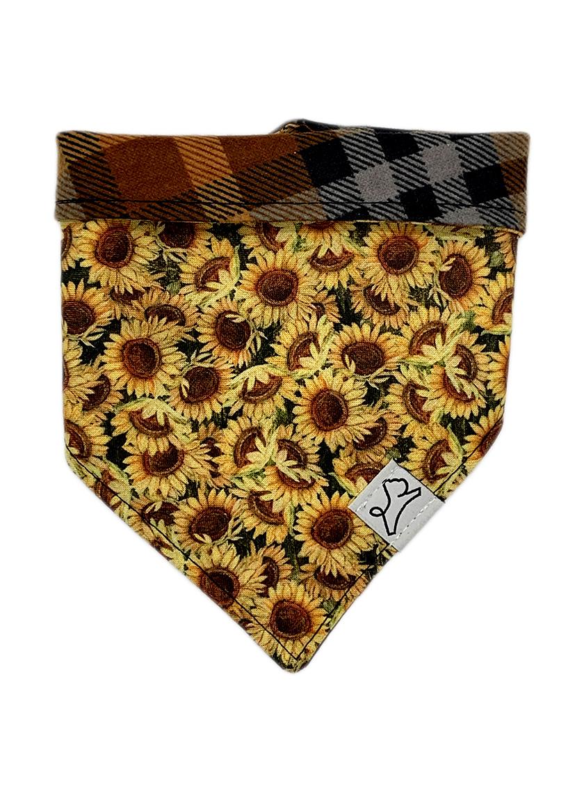 Sunflower Babe
